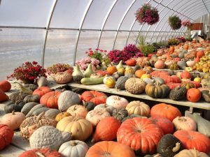 The impressive gallery of various pumpkin selections.